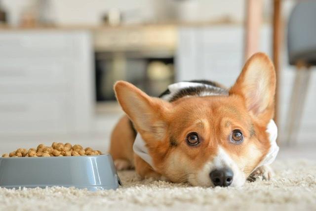 ¿Porqué no quiere comer mi perro?