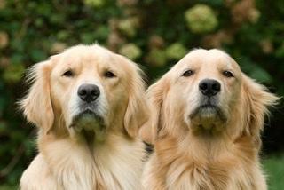 Dos mejor que uno en perros, ¿cuándo sería la opción ideal?
